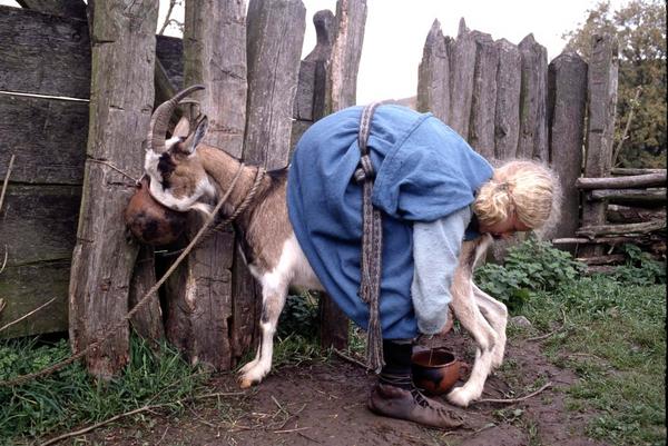 Malkning af ged
